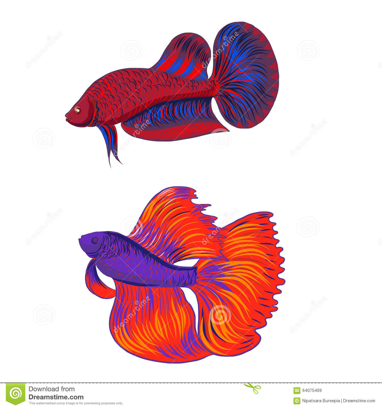 Siamese Fighting Fish clipart #5, Download drawings