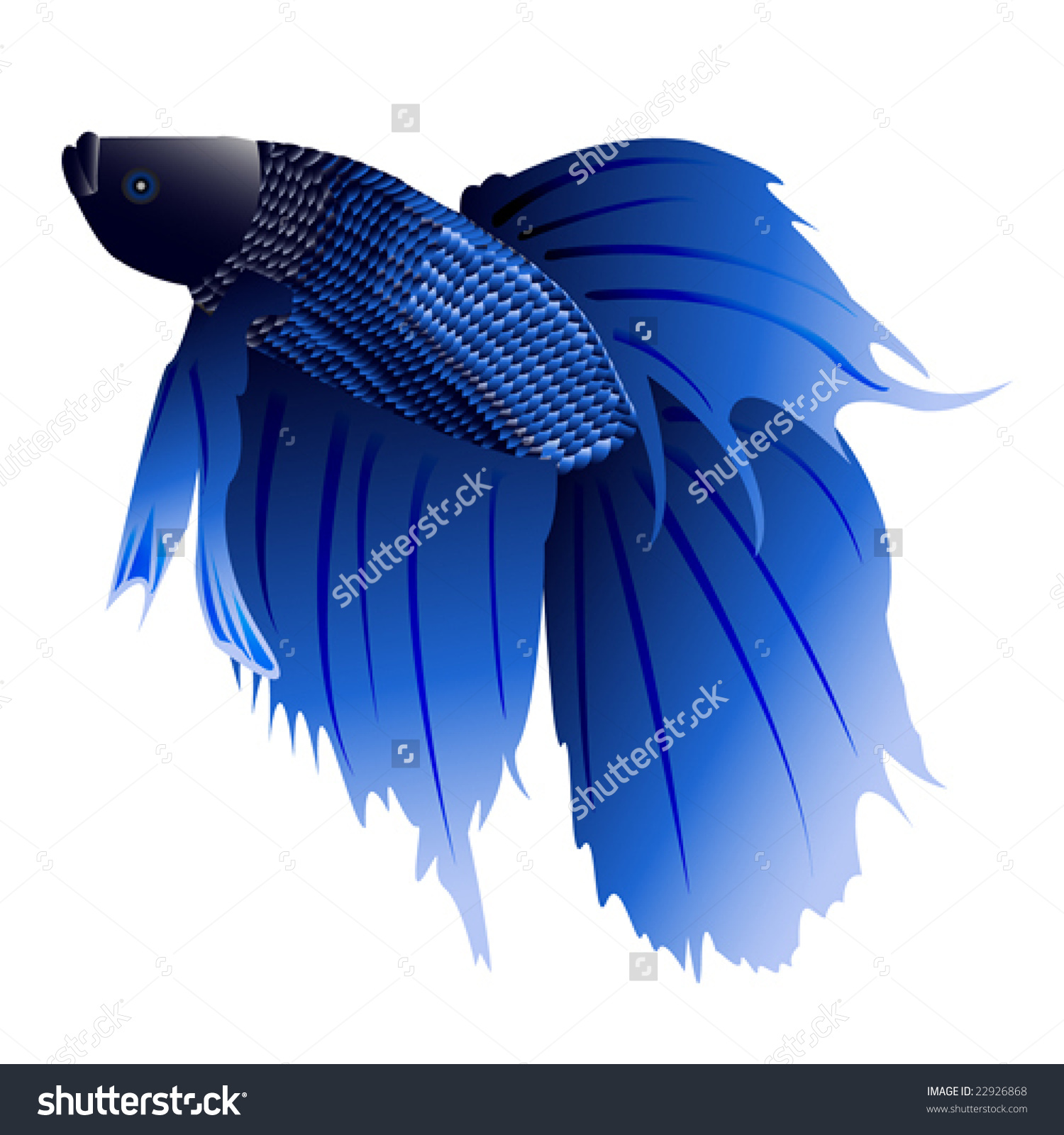 Siamese Fighting Fish clipart #19, Download drawings