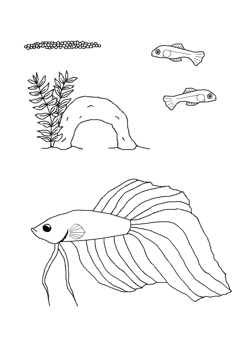 Siamese fighting fish coloring download siamese fighting for Betta fish coloring pages