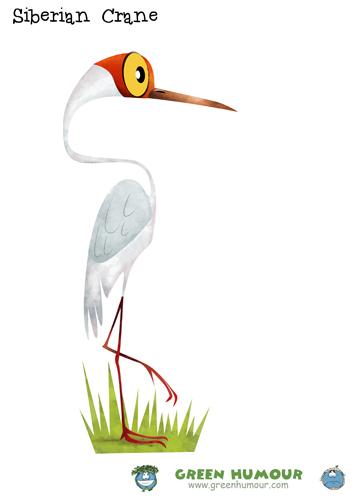 Siberian Crane clipart #9, Download drawings