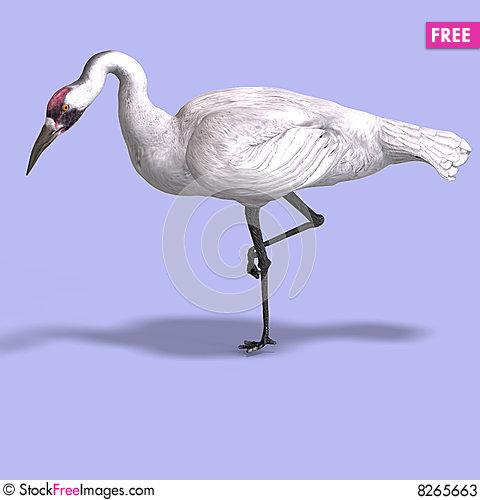 Siberian Crane clipart #10, Download drawings