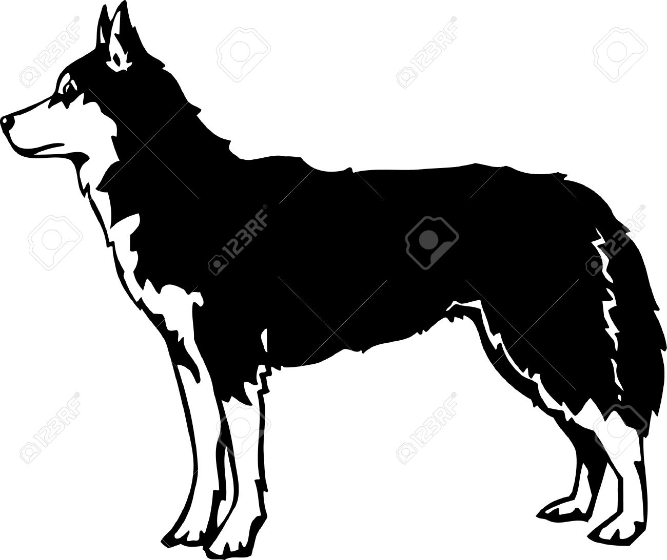 Siberian Husky clipart #9, Download drawings