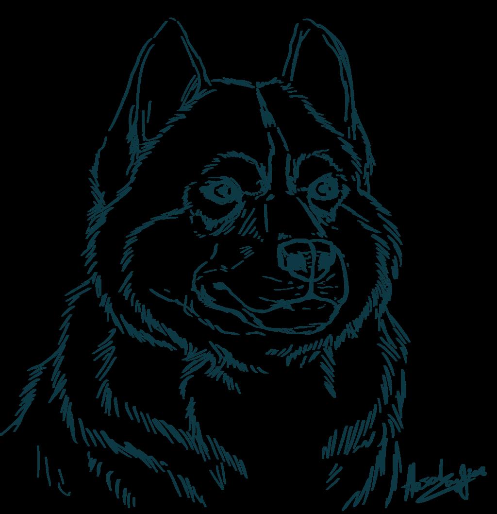 Siberian Husky coloring #7, Download drawings