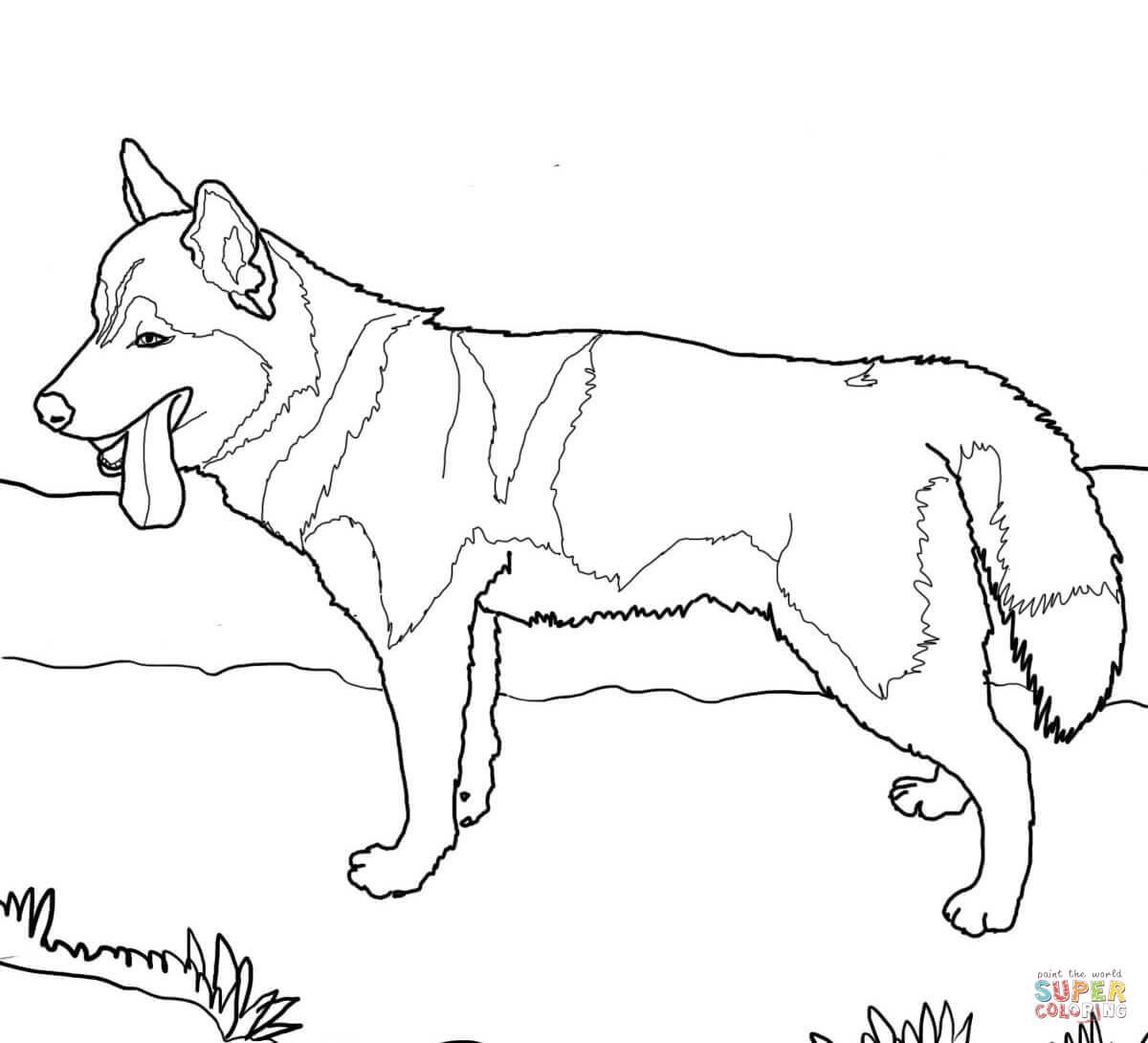 Siberian Husky coloring #17, Download drawings
