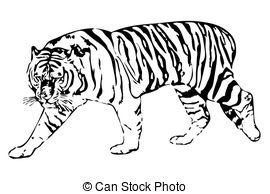 Siberian Tiger clipart #15, Download drawings