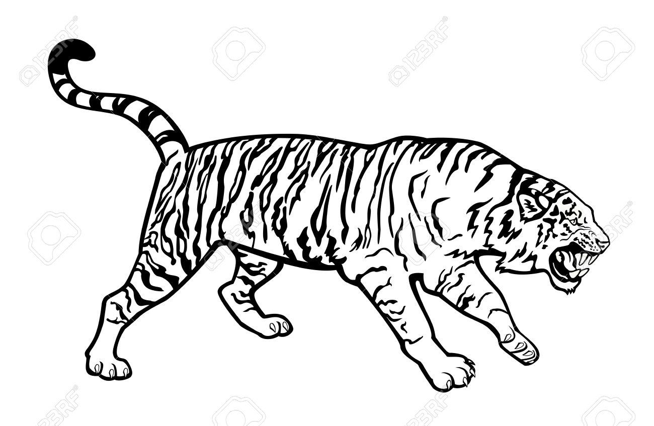 Siberian Tiger clipart #3, Download drawings