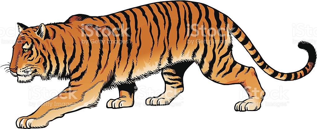 Siberian Tiger clipart #8, Download drawings