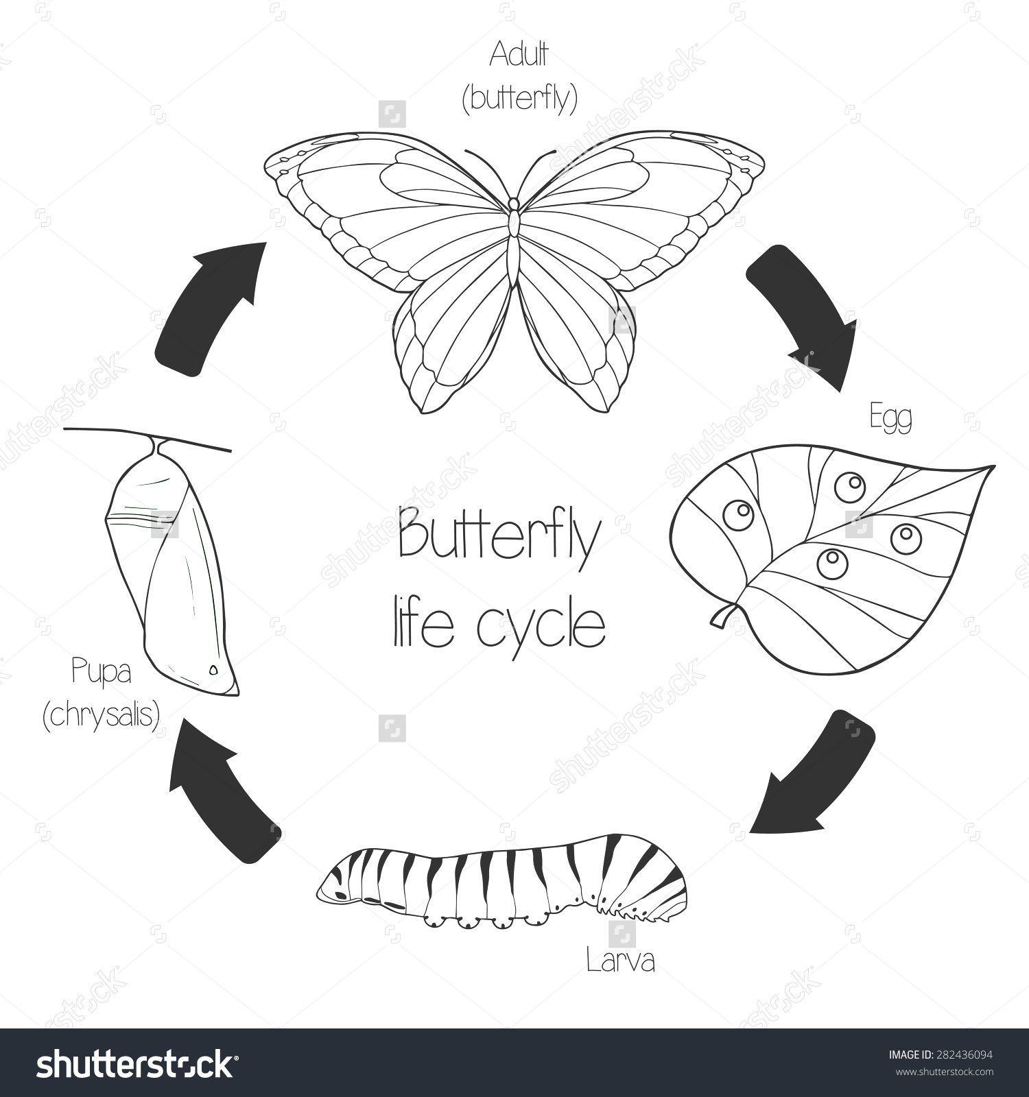 Silk Moth clipart #19, Download drawings