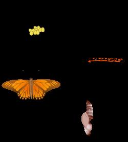 Silk Moth clipart #5, Download drawings