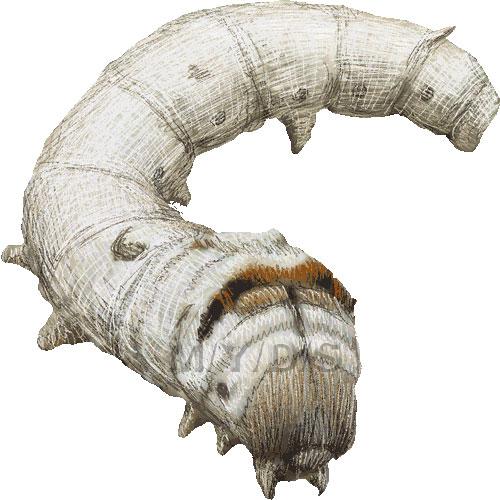 Silk Moth clipart #13, Download drawings