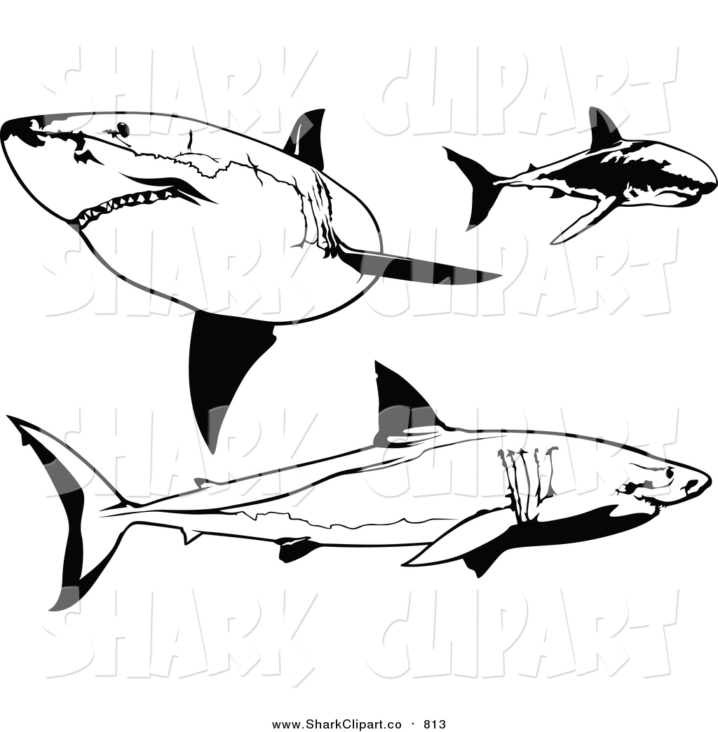 Silky Shark clipart #15, Download drawings