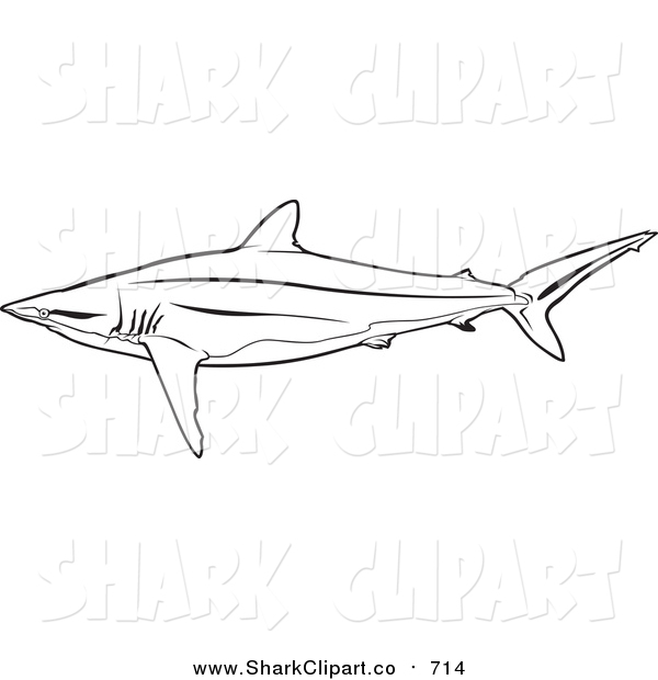 Silky Shark clipart #5, Download drawings