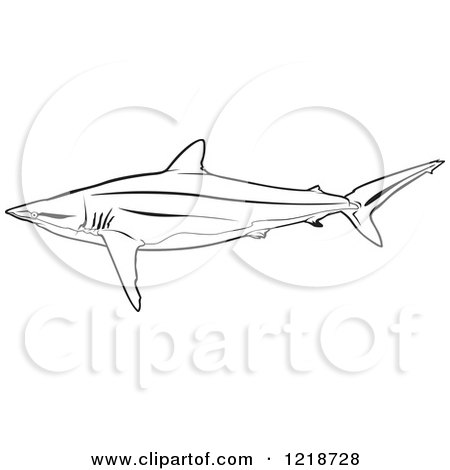Silky Shark clipart #4, Download drawings