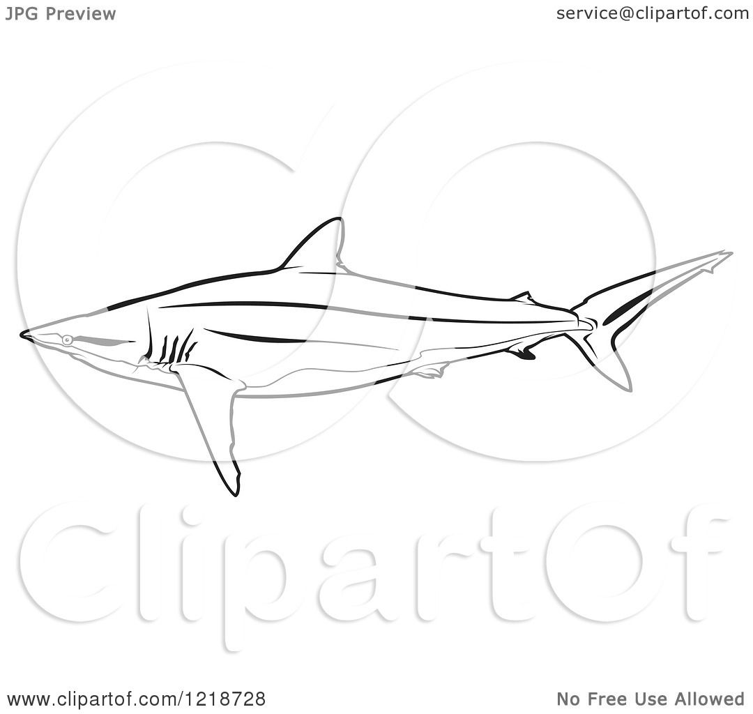 Silky Shark clipart #7, Download drawings
