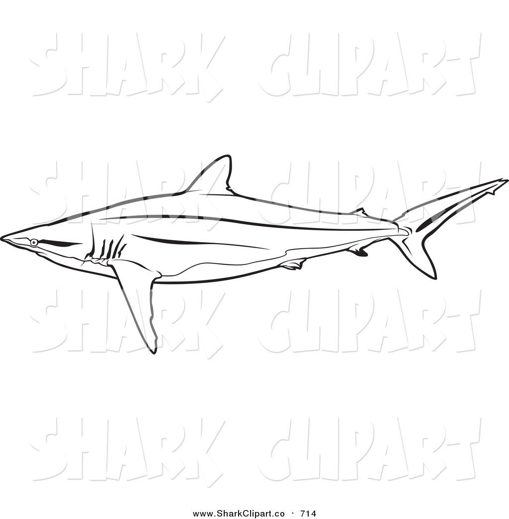 Silky Shark clipart #8, Download drawings