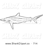 Silky Shark clipart #2, Download drawings