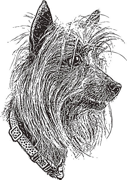 Silky Terrier clipart #8, Download drawings