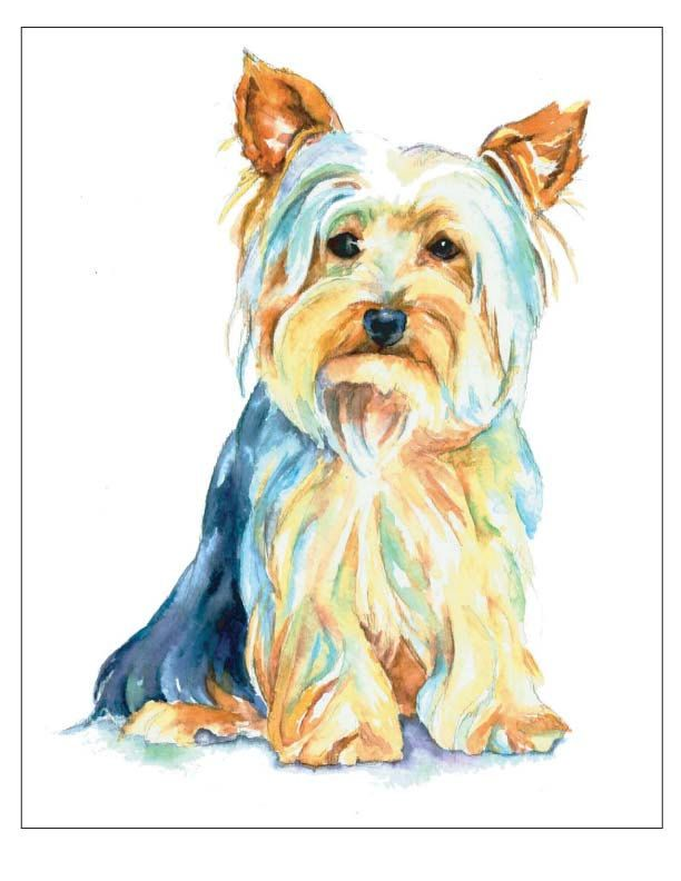 Silky Terrier clipart #10, Download drawings
