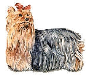 Silky Terrier clipart #13, Download drawings