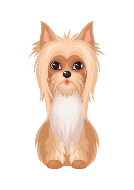 Silky Terrier clipart #12, Download drawings