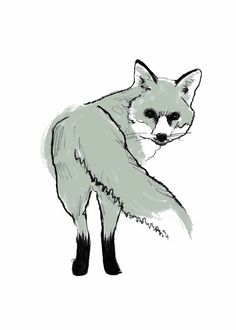 Silver Fox clipart #11, Download drawings