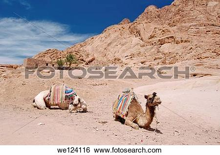 Sinai Peninsula clipart #7, Download drawings