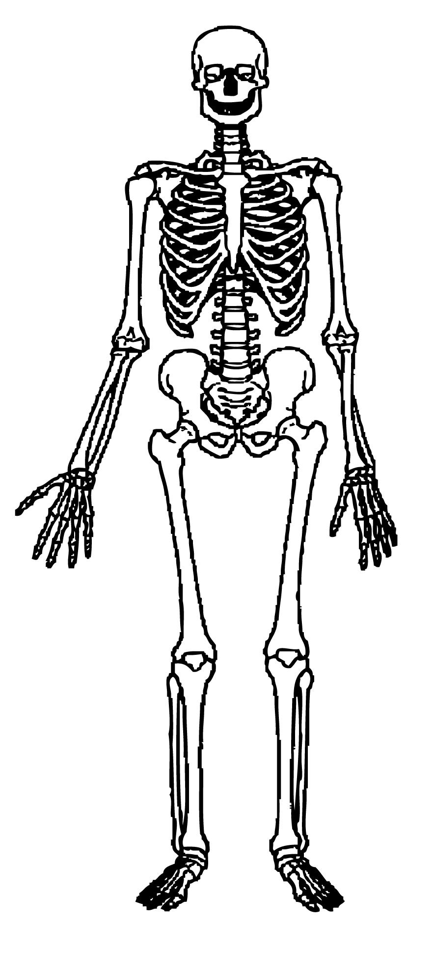 Skeleton clipart #3, Download drawings