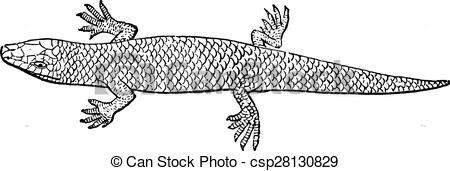 Skink clipart #8, Download drawings