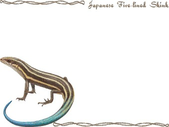 Skink clipart #2, Download drawings