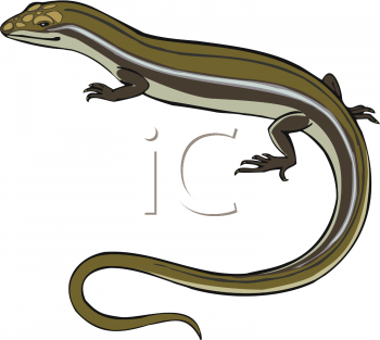 Skink clipart #5, Download drawings