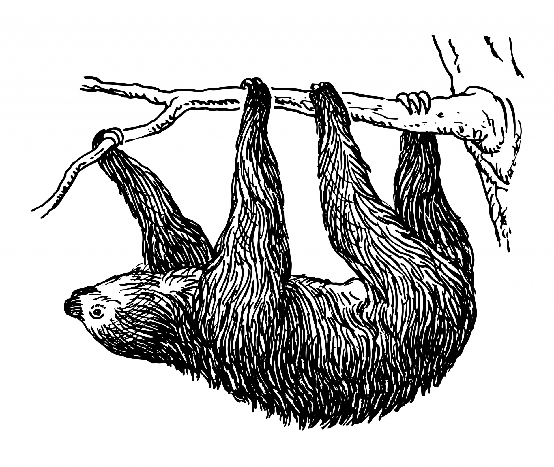 Sloth clipart #1, Download drawings