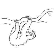 Sloth coloring #20, Download drawings
