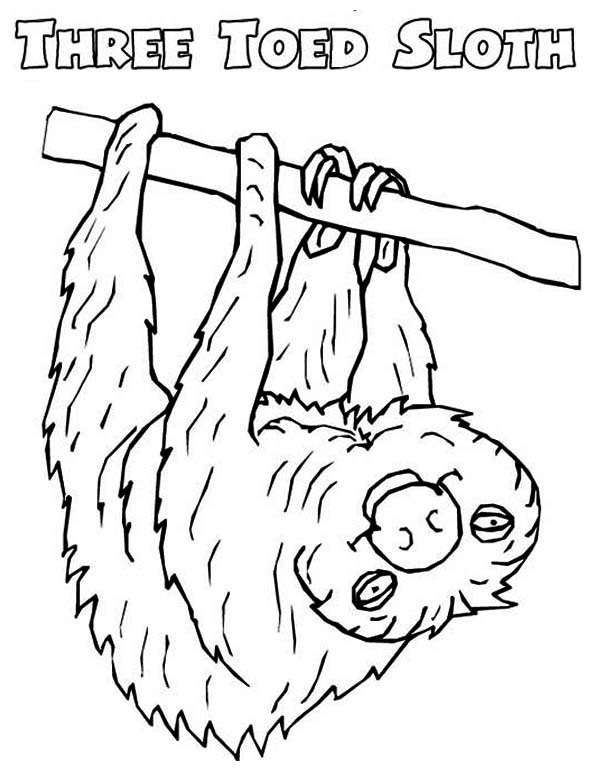 Sloth coloring Download Sloth