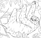Sloth coloring #7, Download drawings