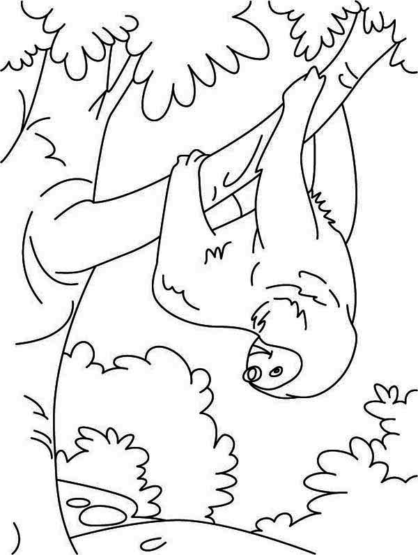 Sloth coloring #6, Download drawings