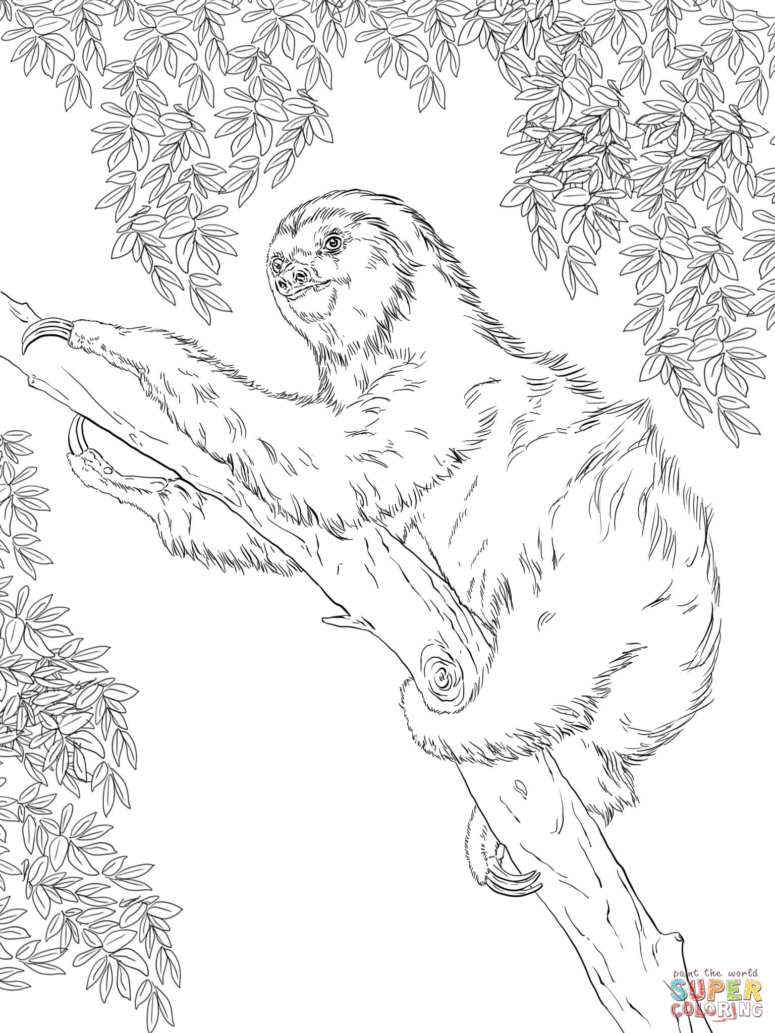 Sloth coloring #2, Download drawings