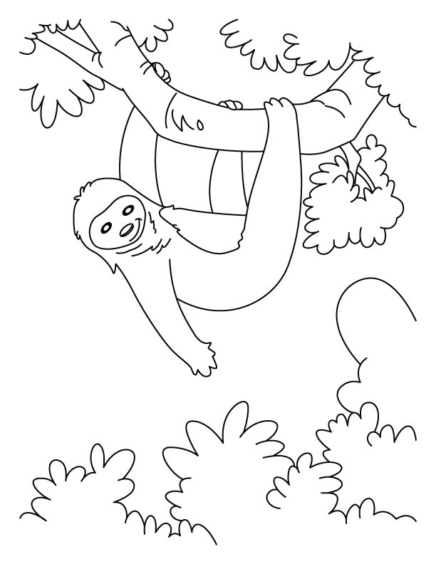 Sloth coloring #9, Download drawings
