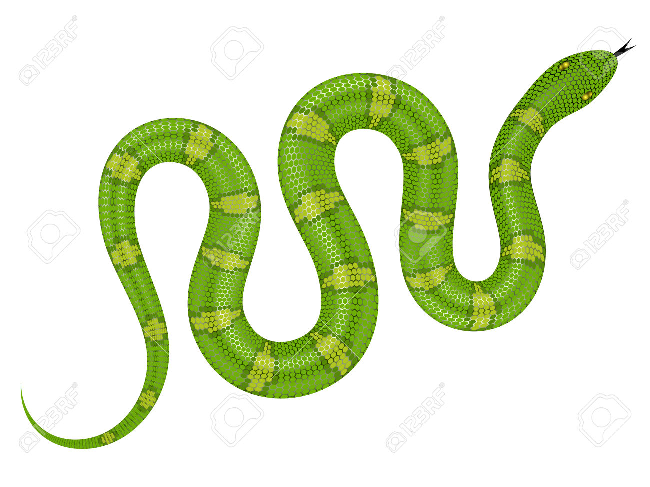 Smooth Green Snake clipart #14, Download drawings