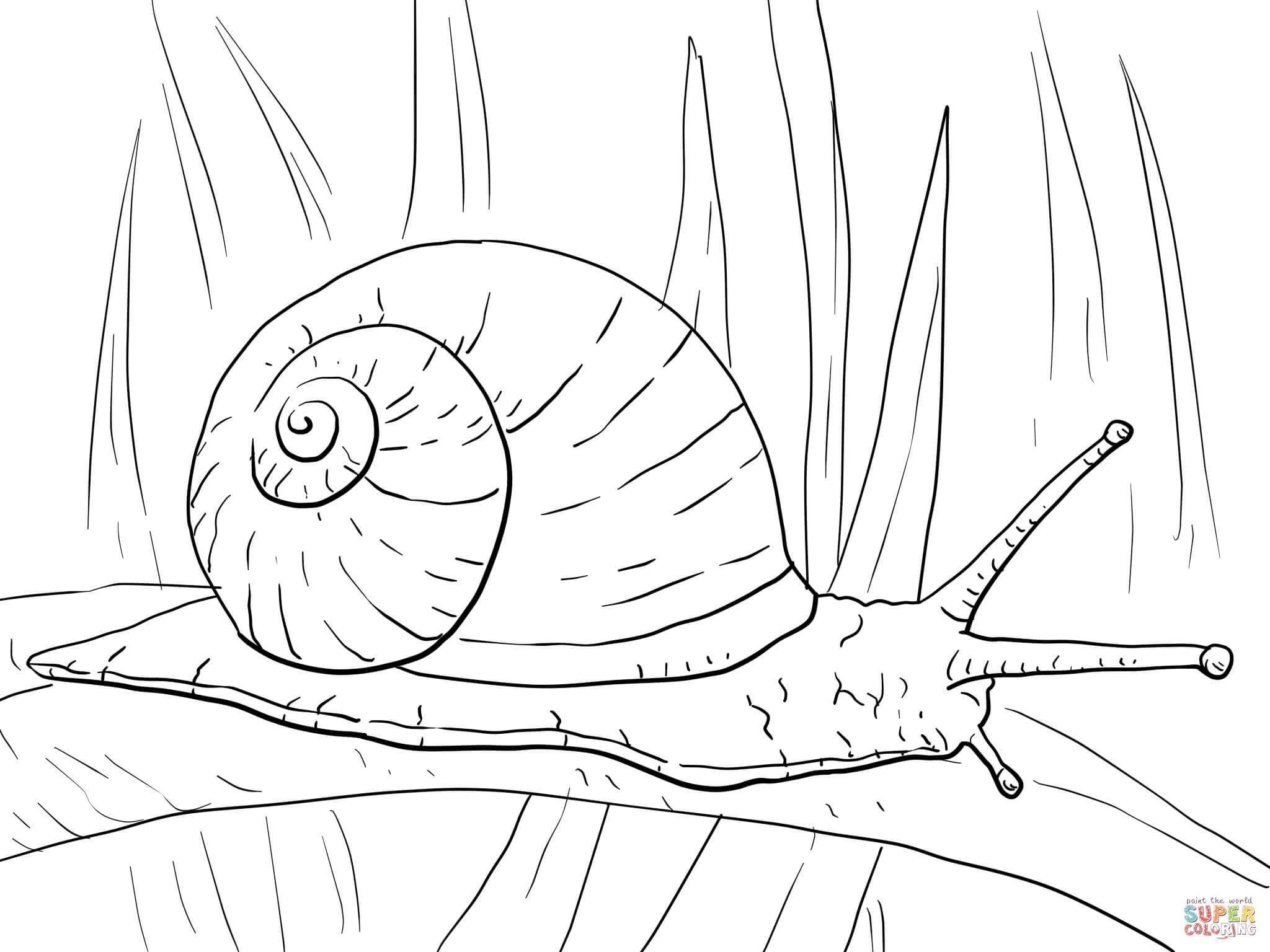 Snail coloring #5, Download drawings