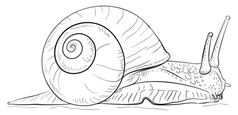 Snail coloring #17, Download drawings