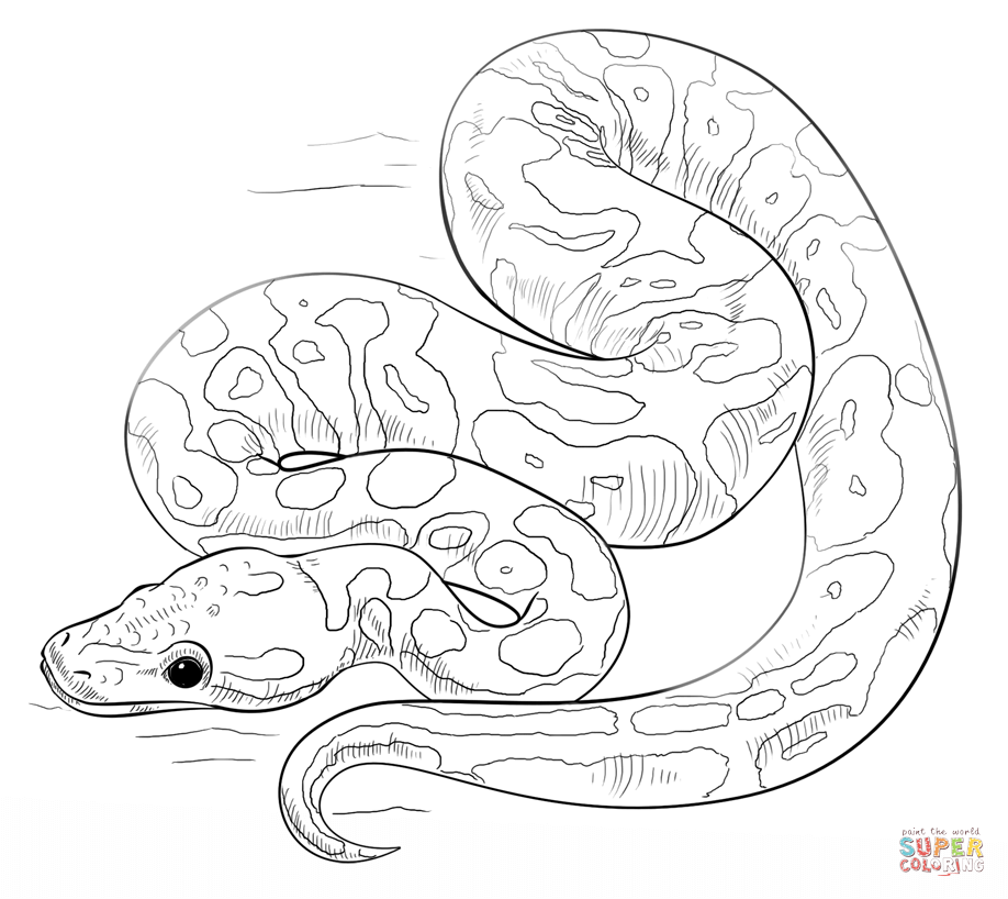 Ball Python coloring #7, Download drawings