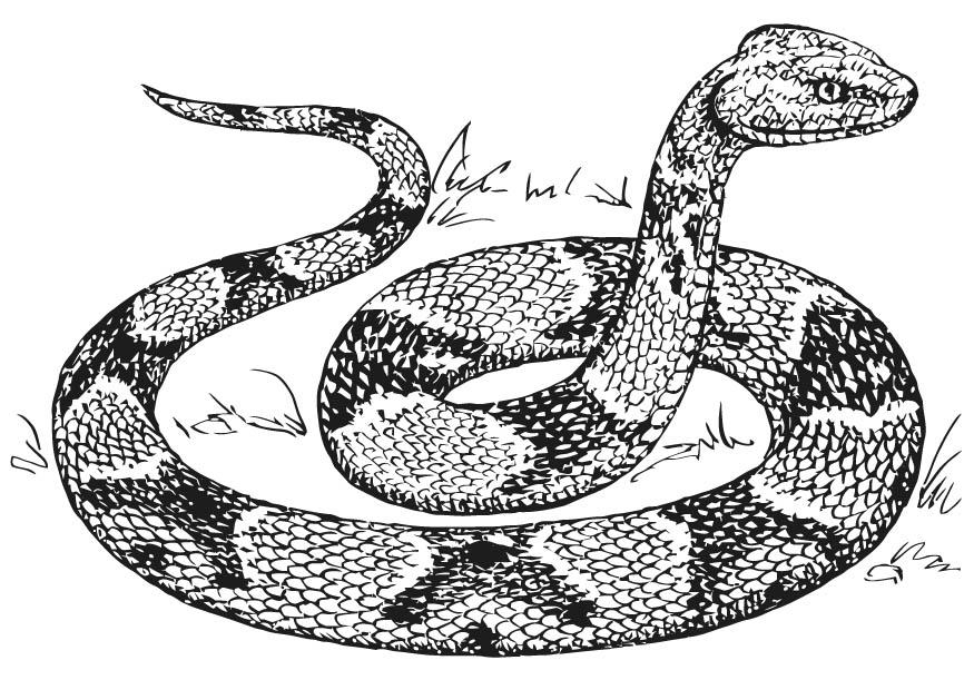 Serpent coloring #15, Download drawings