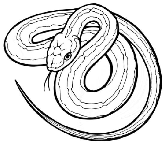 Serpent coloring #11, Download drawings