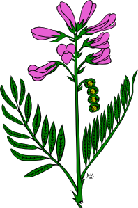 Snapdragon clipart #10, Download drawings