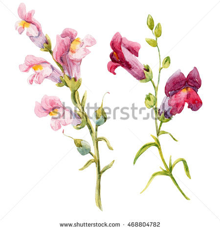 Snapdragons clipart #12, Download drawings