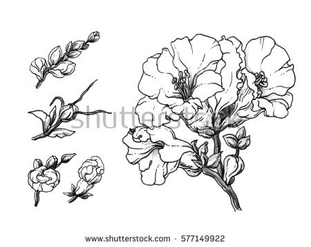 Snapdragons coloring Download Snapdragons coloring