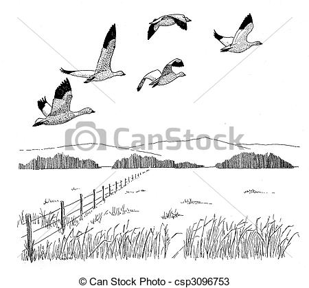 Snow Goose clipart #11, Download drawings