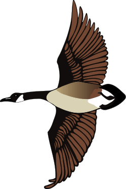 Snow Goose clipart #5, Download drawings