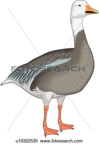 Snow Goose clipart #6, Download drawings