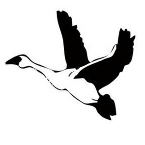 Snow Goose clipart #14, Download drawings